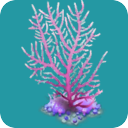 File:COR Lace Coral.png