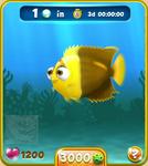 Golden Bicolor Angelfish