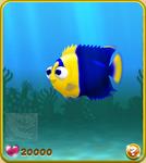 Yellow-Blue Bicolor Angelfish