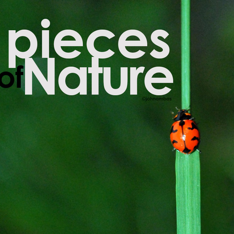File:Pieces-of-nature.png