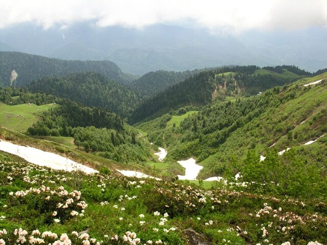 File:Mountain-valley-blossoming.jpg