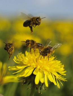 File:Ecosystem-photo2.jpg