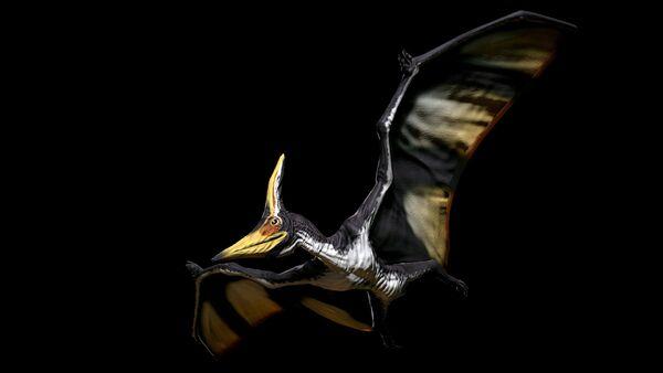 Shadows Peak Pteranodon