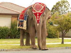 Anala-the-elephant-princess-5807923-1024-768