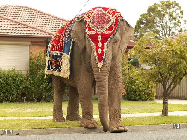File:Anala-the-elephant-princess-5807923-1024-768.jpg