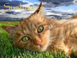 File:Sunbreeze.jpg