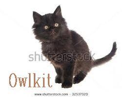 Owlkit
