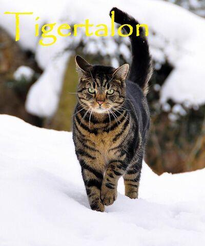 File:Tigertalon.jpg