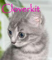 Cloverkit