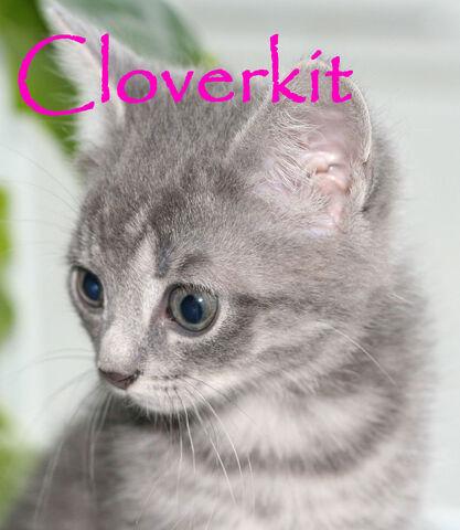 File:Cloverkit.jpg