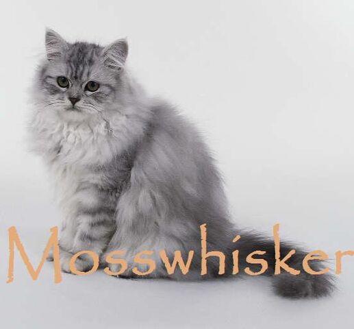 File:Mosswhisker.JPG