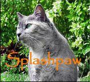 Splashpaw