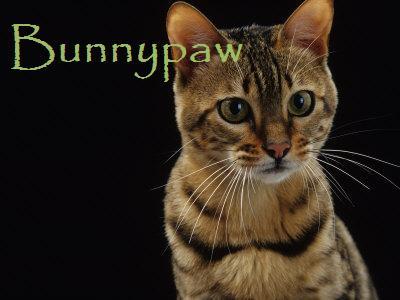 File:Bunnypaw.jpg