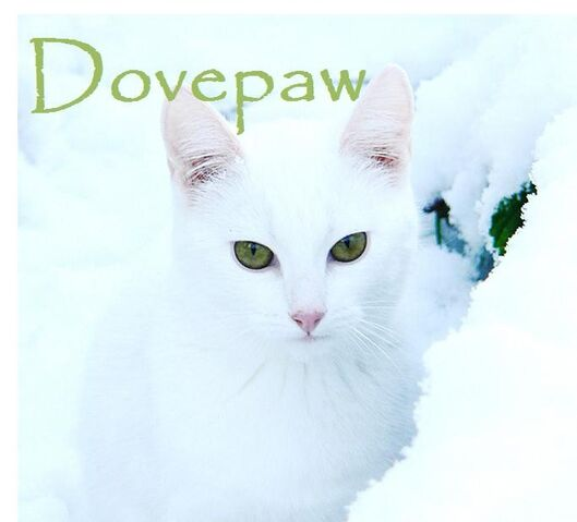 File:Dovepaw.jpg