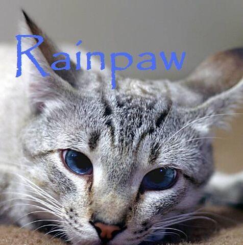 File:Rainpaw.jpg