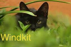 Windkit