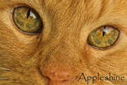 Appleshine