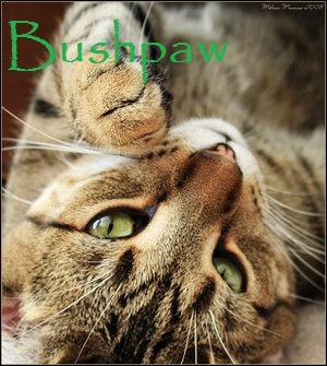 File:Bushpaw.jpg