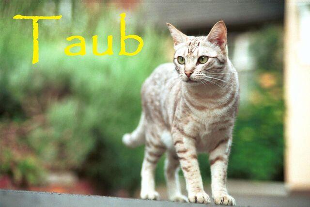 File:Taub.jpg