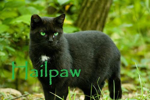 Hailpaw