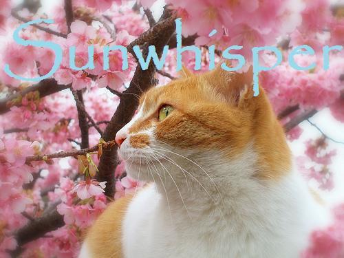File:Sunwhisper.jpg
