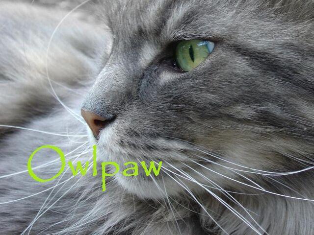 File:Owlpaw.jpg