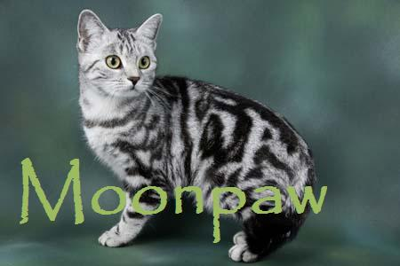 File:Moonpaw.jpg