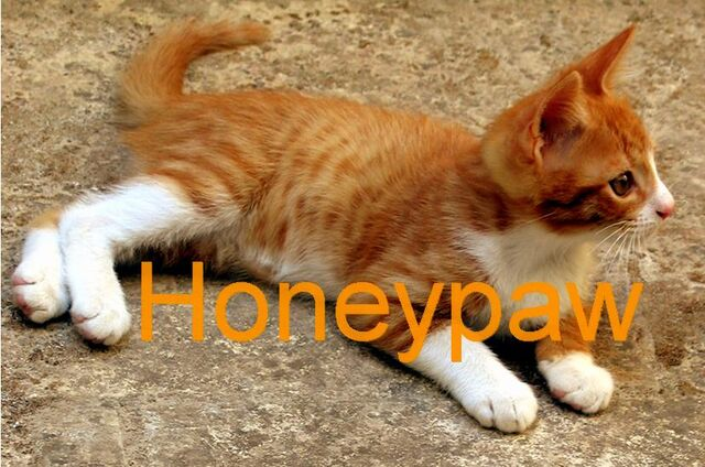 File:Honeypaw.jpg