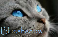 Bshadow