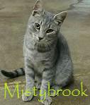 Mibrook