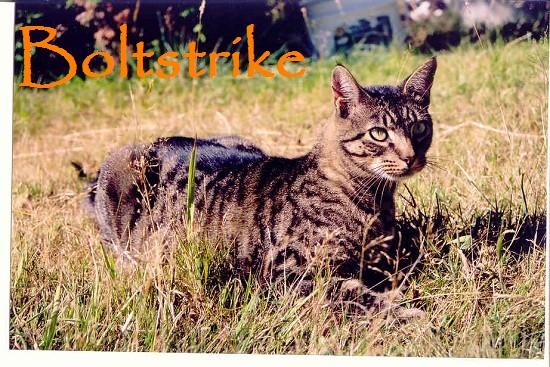 File:Boltstrike.jpg