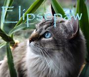 Elipsepaw