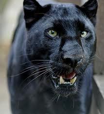File:Shapeshifter-Leopard.png