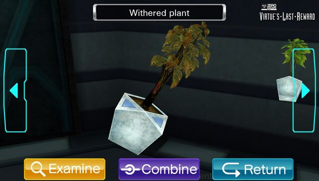 File:WitheredPlant.TreatmentCenter.jpg