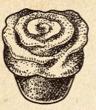 File:Carnation cake.png