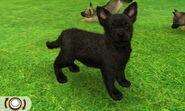 Shep-black