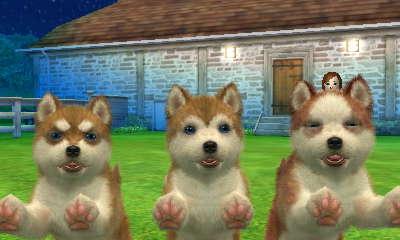 File:Brown huskies.JPG