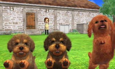 File:Odd poodles.JPG