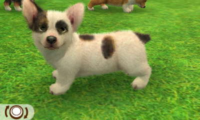 File:Spotted corgi.JPG
