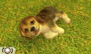Tricolour beagle in Nitendogs + Cats Golden Retriever and Friends version