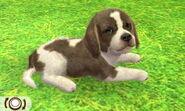 Beagle-odd4