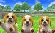 Beagle-lemonwhite