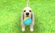 White basset wtennisball