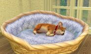 Sleeping-wickerdogbed