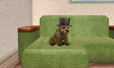 File:Dirty dirty dog.JPG