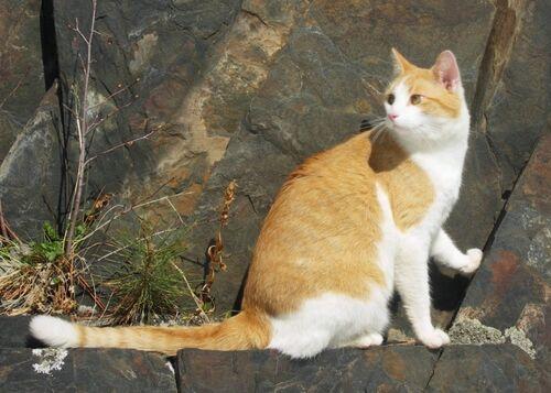 Black hills cat-tochichi