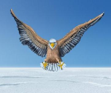 File:Snow Eagle.jpg