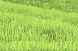File:Grass.JPG