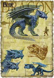 Blue dragon anatomy