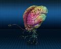 Brain Gorb Troop